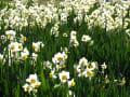 途中の花3