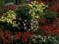 須磨の春薔薇2017