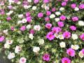 花追いウォーキング