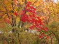 2013年札幌の秋第4報