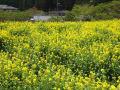 春の大原~三千院