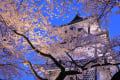 兼六園と金沢城の桜
