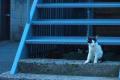 [14]ネコ