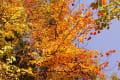 秋の林道散策