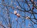 善光寺散歩:春の花が咲きだした!