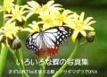 いろいろな蝶の写真集