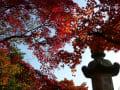 [5]須磨の離宮公園・植物園和室1