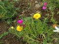 懐かしい花