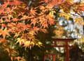 京都の紅葉(下鴨神社、南禅寺)