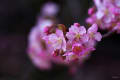 桜セラピー