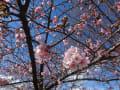 春の訪れを感じにぶらっと。ももちゃん(猫)
