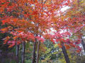 晩秋の赤城自然園2019年11月14日
