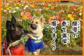 愛犬鈴と風愛 白浜フラワーパーク