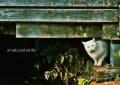 [3]白猫
