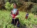 ベトナムを歩く・ナベ村
