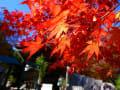 宮島の紅葉(11月26日撮影)