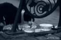 [50]水を飲む猫