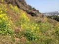 耕作放棄地(元ミカン畑)の再生