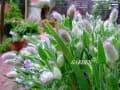私の庭  2010