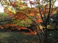 2014/11 東京庭園巡り1