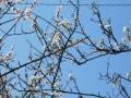 杏子と李のコラボ