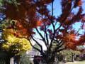 東京・神奈川の紅葉2013