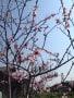 栽培記録-3(果樹類)