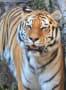 動物写真1