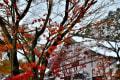 宝徳寺の雪景色