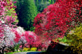 2016 南信州は花桃の里の花げしき