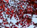 [4]須磨の離宮公園・植物園・和室2