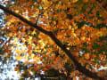 京都府立植物園&more・・・2014・11・13