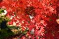 紅葉の谷厳寺