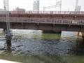 [84]寝屋川橋から