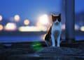 [13]夜のネコ