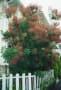 我が家のシンボルツリー