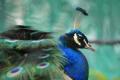 旭山動物園と風のガーデン