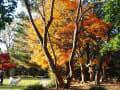 思い出の秋景色