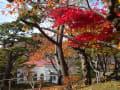 函館公園・紅葉2015・11・7