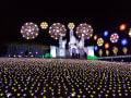 2019/11/26 あしかがフラワーパーク光の花の庭