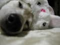 コスプレな愛犬まる