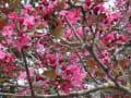 春の庭 レッドシリーズ
