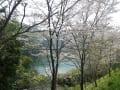 仁淀川水系 桜