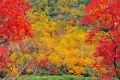 これぞ信州は小谷村の秋彩な光景ウルワシキ栂池自然園。