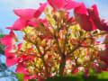 6月の府立植物園