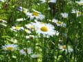 近所のお花たち