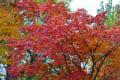 深まる札幌の秋