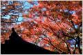 鎌倉・瑞泉寺の紅葉