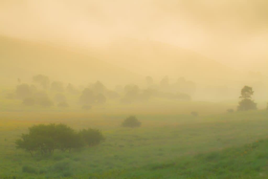 池のくるみ 夏の朝景の写真