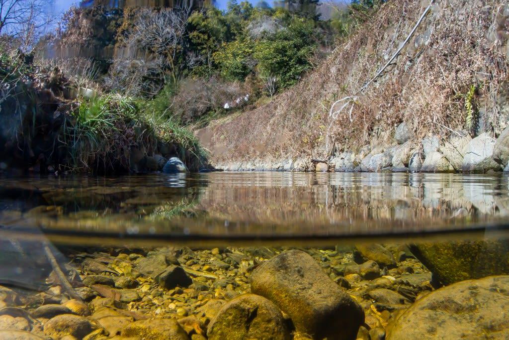 ゲンジボタルの生息環境の写真
